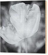 Tulips #2 Wood Print