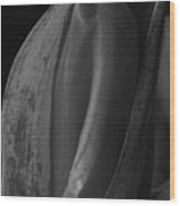Tulips 3 Wood Print
