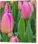 Tulips 5 Wood Print