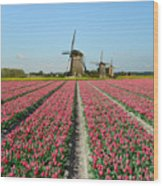 Tulips And Windmills In Holland Wood Print
