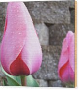 Tulips Artwork Flowers 26 Pink Tulip Flowers Art Prints Nature Floral Art Wood Print