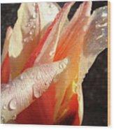 Tulips Artwork Flowers Floral Art Prints Spring Peach Tulip Flower Macro Wood Print