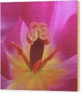 Tulips Artwork Pink Purple Tuli Flower Art Prints Spring Garden Nature Wood Print