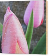 Tulips Artwork Pink Tulip Flowers Srping Florals Art Prints Baslee Troutman Wood Print
