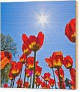 Tulips At Ottawa Tulips Festival Wood Print