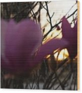 Tulips At Sunset I Wood Print