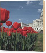 Tulips At The Capitol Wood Print