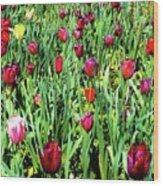 Tulips Blooming Wood Print