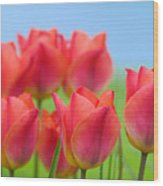 Tulips Close Up  Wood Print
