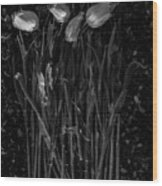 Tulips Decaying At Sunset Wood Print