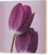 Tulips Wood Print by Diane Reed