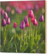 Tulips Dream Wood Print