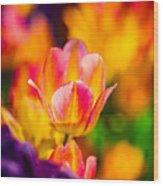Tulips Enchanting 15 Wood Print