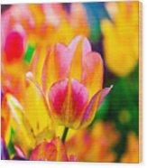 Tulips Enchanting 16 Wood Print