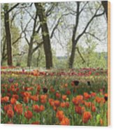 Tulips Everywhere 2 Wood Print