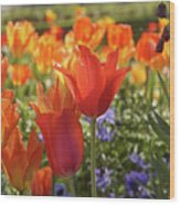 Tulips Everywhere 3 Wood Print