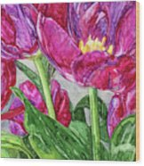 Tulips From A Friend Wood Print