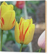 Tulips Garden Art Prints Yellow Red Tulip Flowers Baslee Troutman Wood Print