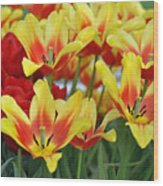 Tulips Glorious Tulip Monsella Wood Print by Debra  Miller