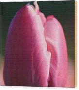 Tulip's Handshake Wood Print