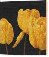 Tulips - Id 16235-220512-0422 Wood Print
