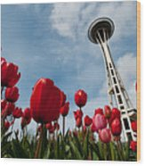 Tulips In Seattle H081 Wood Print