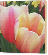 Tulips In Soft Pastels Wood Print