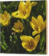 Tulips In Sping Wood Print