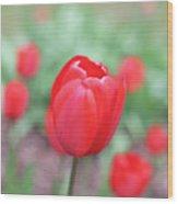 Tulips In Spring 4 Wood Print