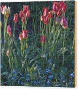 Tulips In Sunshine Wood Print