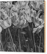 Tulips In The Breeze Wood Print