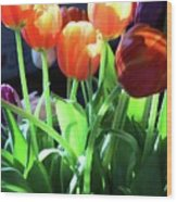 Tulips In The Light Wood Print
