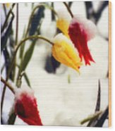 Tulips In The Snow Wood Print