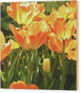 Tulips In The Sunlight Wood Print