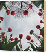 Tulips In Wonderland H083 Wood Print