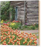 Tulips Lead To The Cabin Wood Print