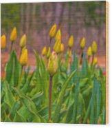 Tulips Love Wood Print