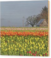 Tulips Morning Landscape Wood Print
