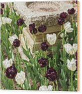 Tulips Surround The Bird Bath Wood Print