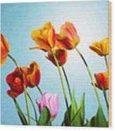 Tulips Wood Print by Trevor Wintle