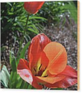Tulips Wearing Orange Wood Print