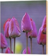Tullips  Wood Print