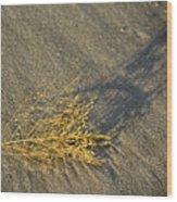 Tumble Seaweed Wood Print