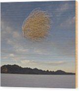 Tumbleweed In Mid Air Wood Print