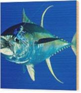 Tuna Magic Wood Print