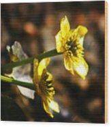 Tundra Rose Wood Print