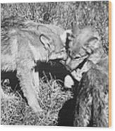 Tundra Wolf Pups Wood Print