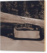Tunnel Log - Sequoia National Park Wood Print