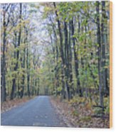 Tunnel Of Trees Wood Print