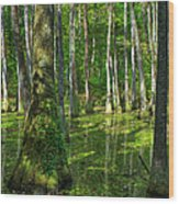 Tupelo Trees In Mississippi  Wood Print